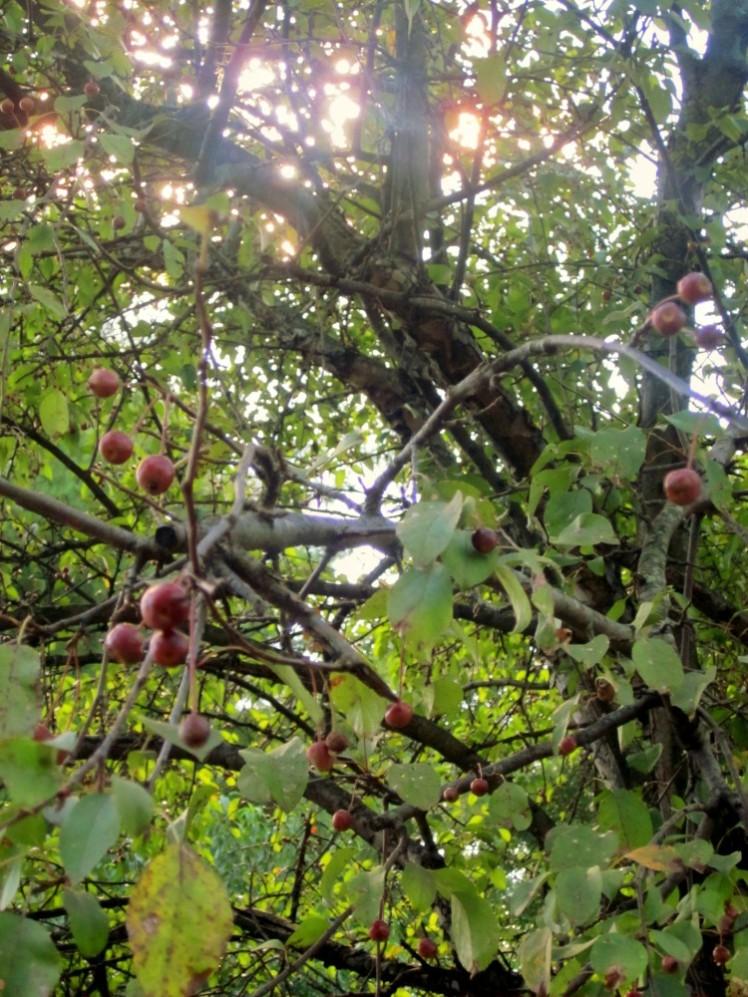 upthetree
