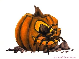 pumpkin and spider_adrian