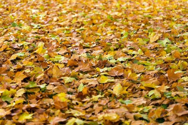 autumn-940401_1280.jpg